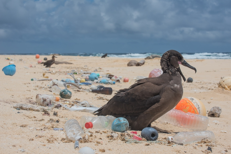 Bird-surrounded-by-plastic-photo-by-Matthew_Chauvin