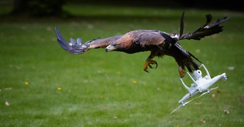 1512641627-politie-stopt-met-inzet-anti-drone-roofvogels-12-2017