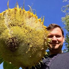 WhatsNext tuin zonnebloem Steven Dupont